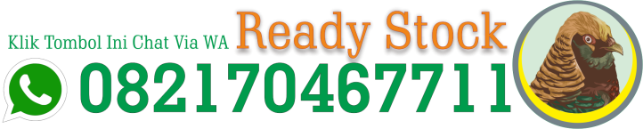 Ready Stock ayamhiasfarm.com