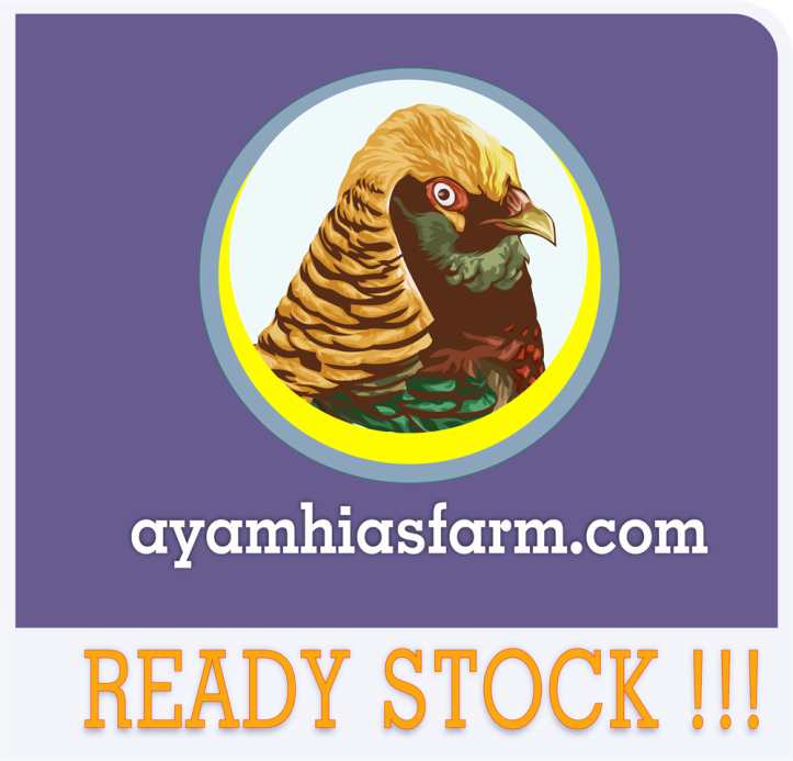 Ready Stock ayamhiasfarm